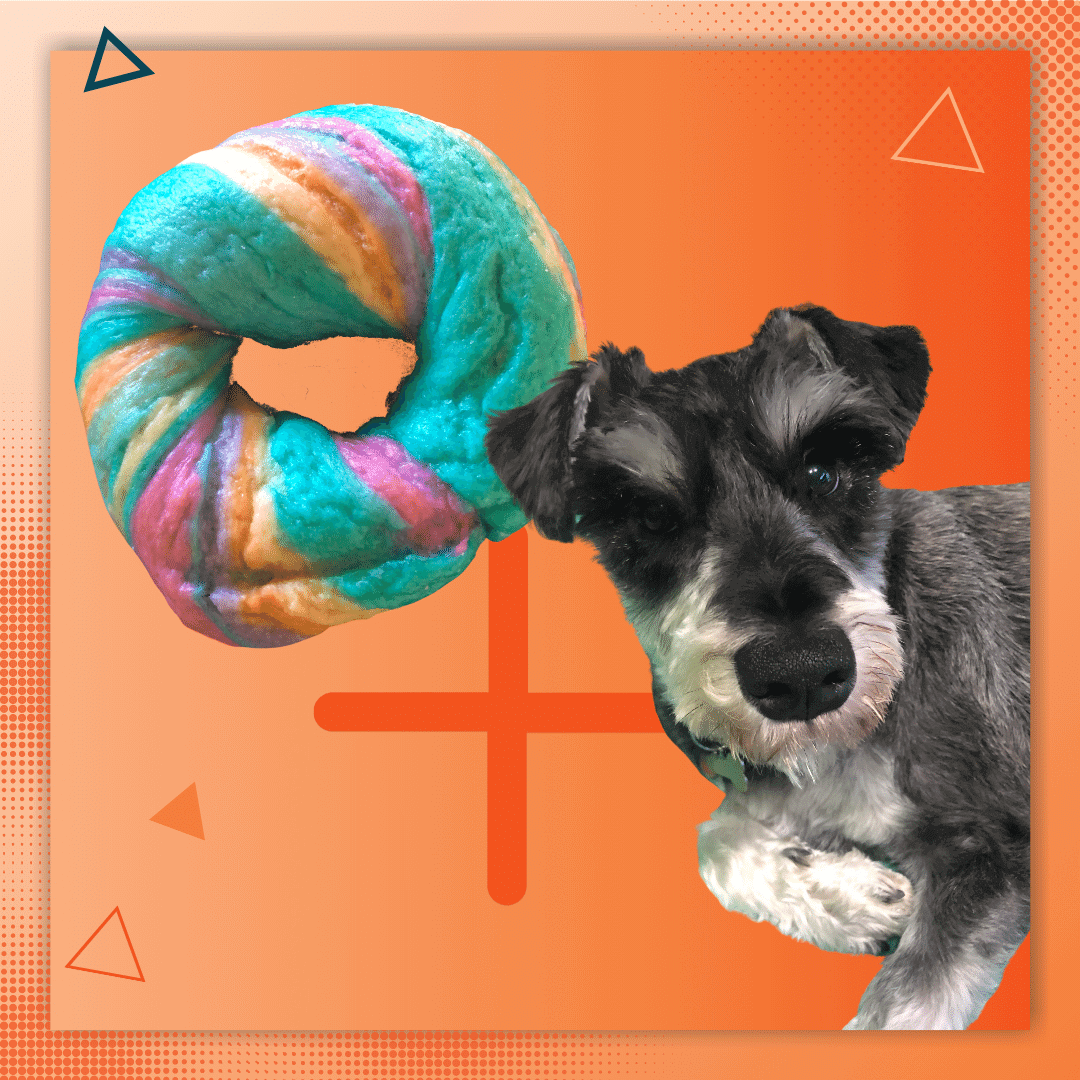 When Your Dog Eats a Rainbow Bagel